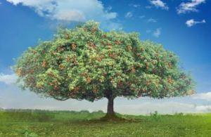 pohon berbuah lebat